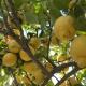Balsam Crema Limón y Laurel