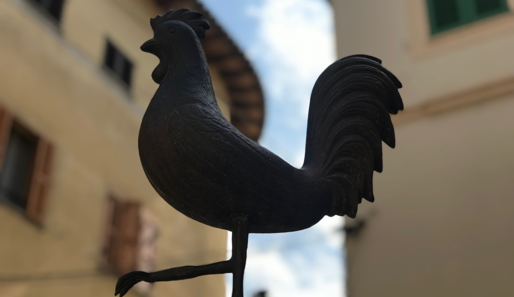 Gallo de Pollença